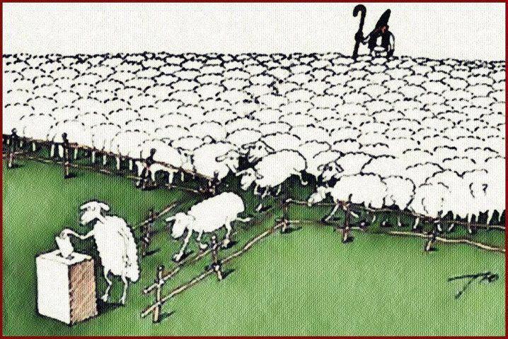 España ya es un pueblo de borregos atolondrados que soportan todos los abusos de los políticos