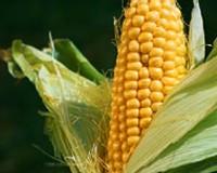 Democracia y biocombustibles