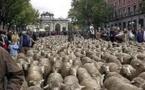 En España se exige hablar inglés para ser pastor de ovejas, pero al político no se le exige nada